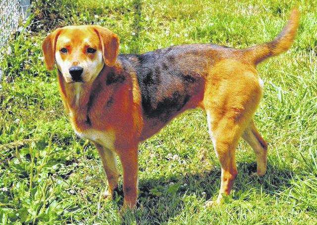 web1_GND-dog-Belle-1.jpg